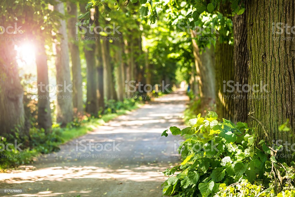Beautiful avenue with trees and sun stock photo