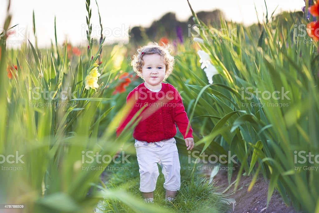 Beautiful baby girl walking in a gladiolus field at sunset royalty-free stock photo
