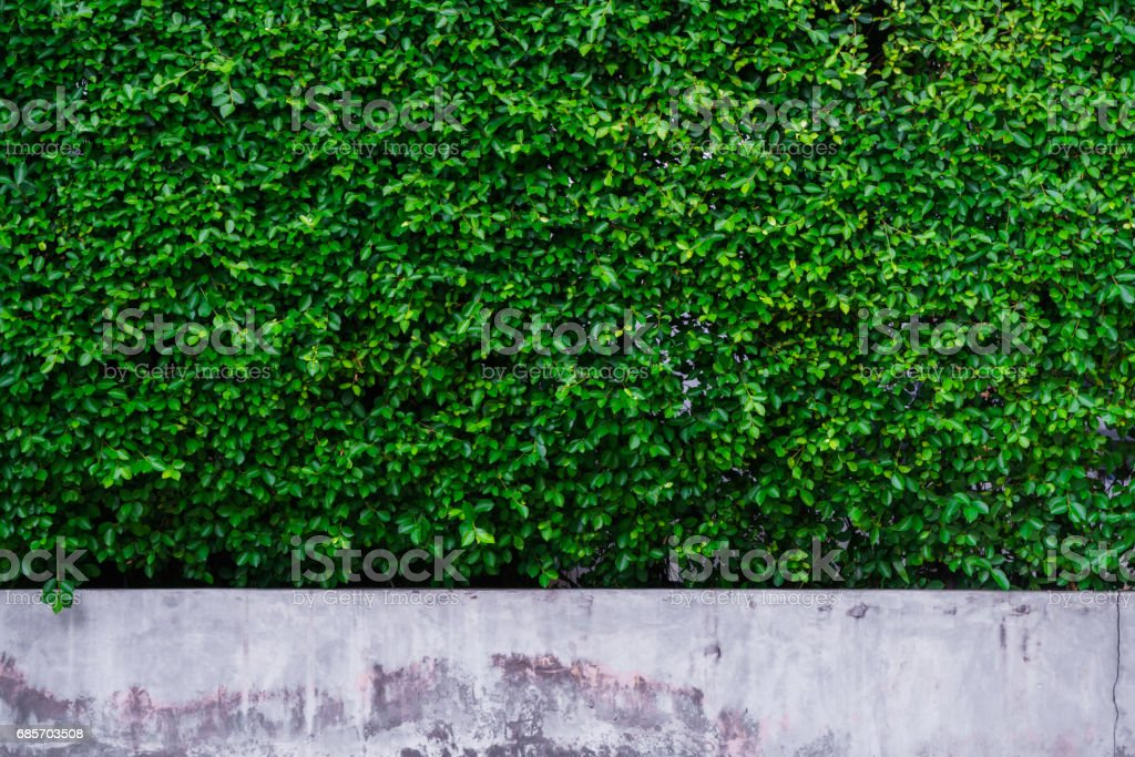Beautiful background tree wall on the concrete stock photo