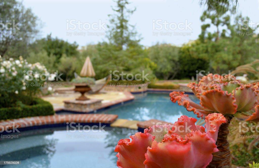 beautiful backyard pool royalty-free stock photo