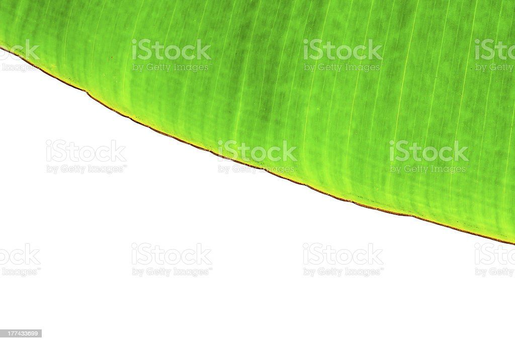 beautiful banana leaf isolated royalty-free stock photo