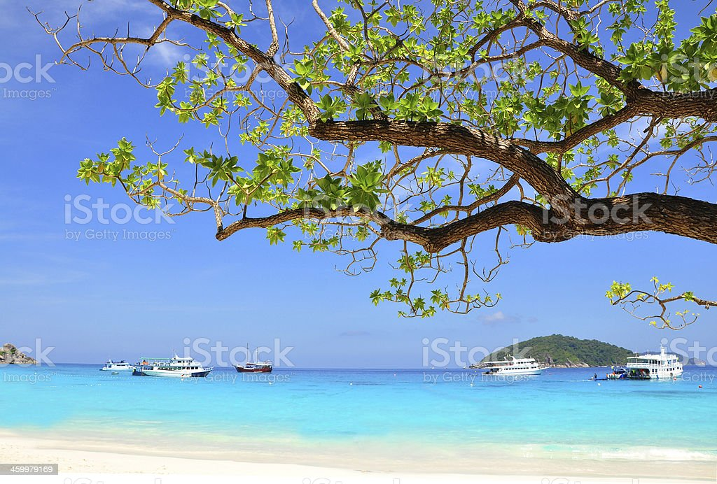 Beautiful beach and branch from tree on Similan Island, THAILAND stock photo
