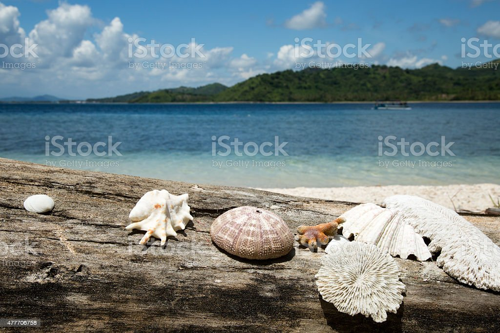 Beautiful beach decorate with sea shell and coralon on wooden. stock photo