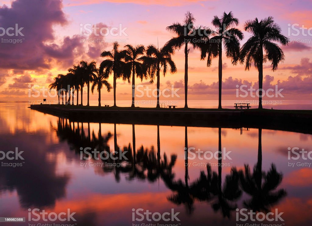 A beautiful beach with palm trees at sunset stock photo