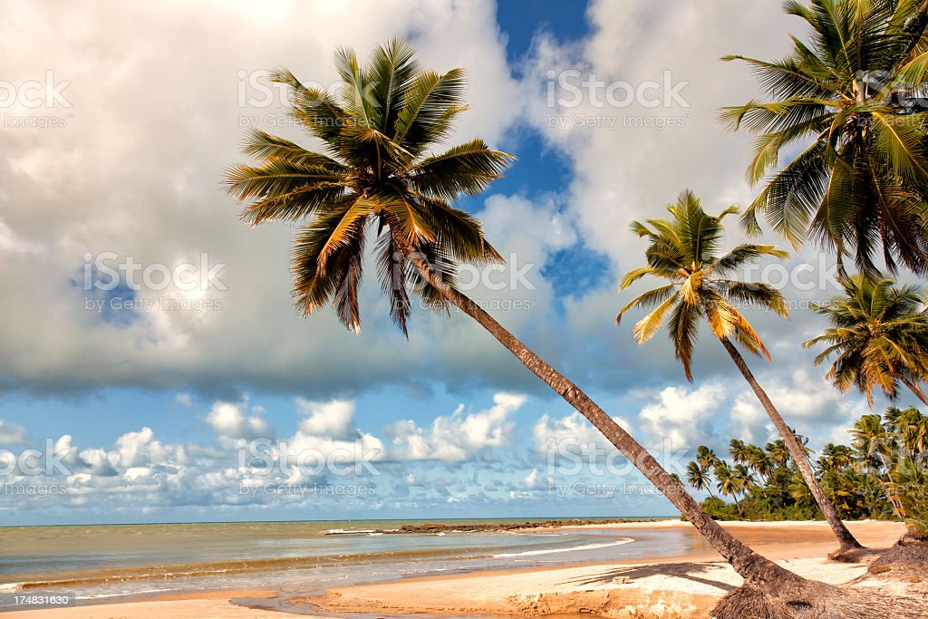 A beautiful beach with palm trees stock photo