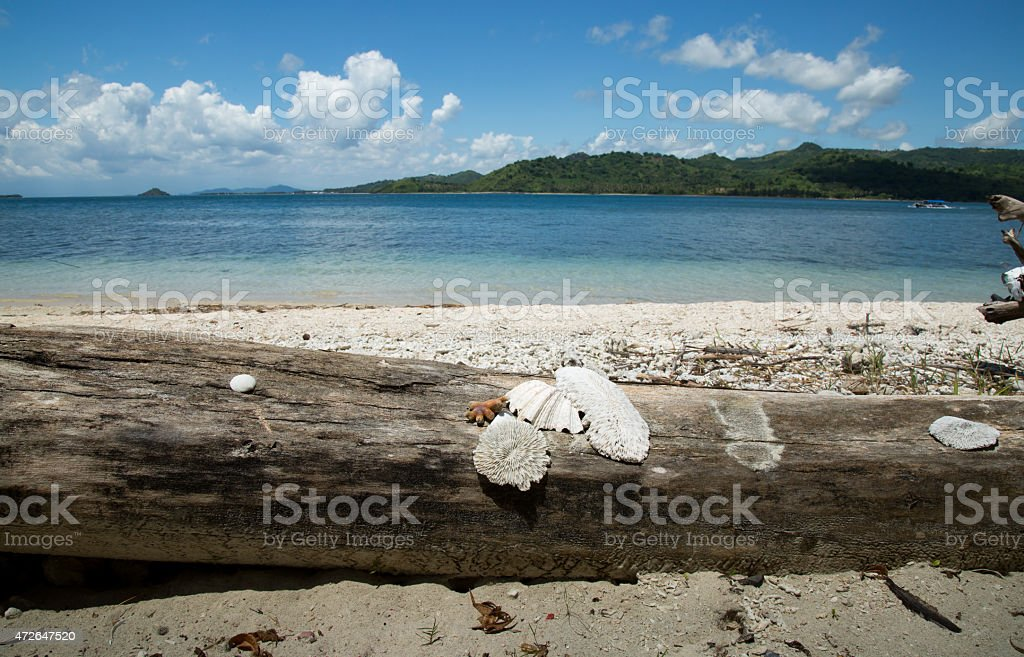 Beautiful beach with seashell. stock photo
