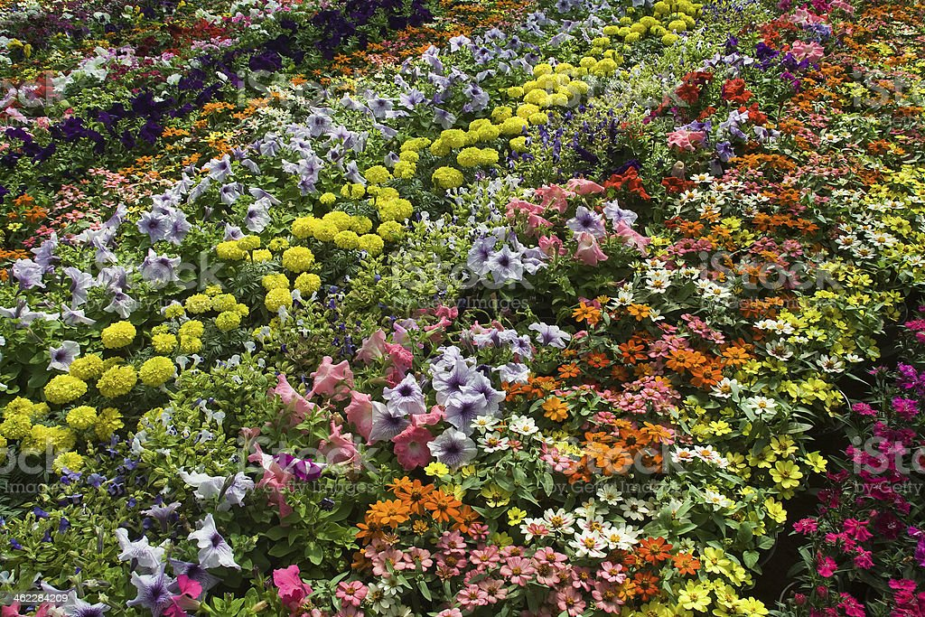 Beautiful Bed of Flowers stock photo