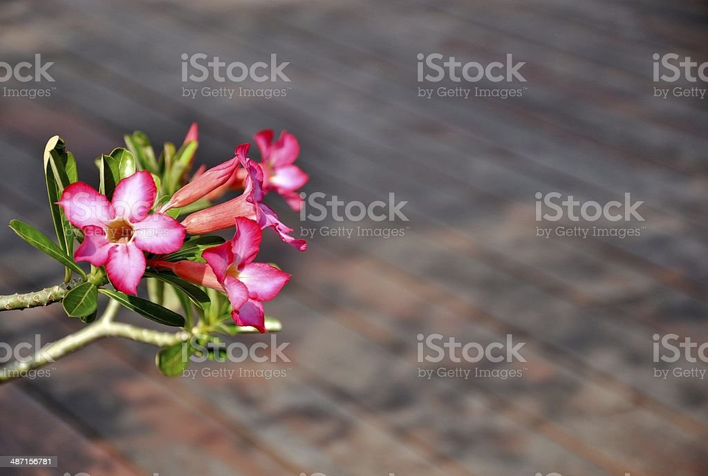 beautiful bell flower royalty-free stock photo