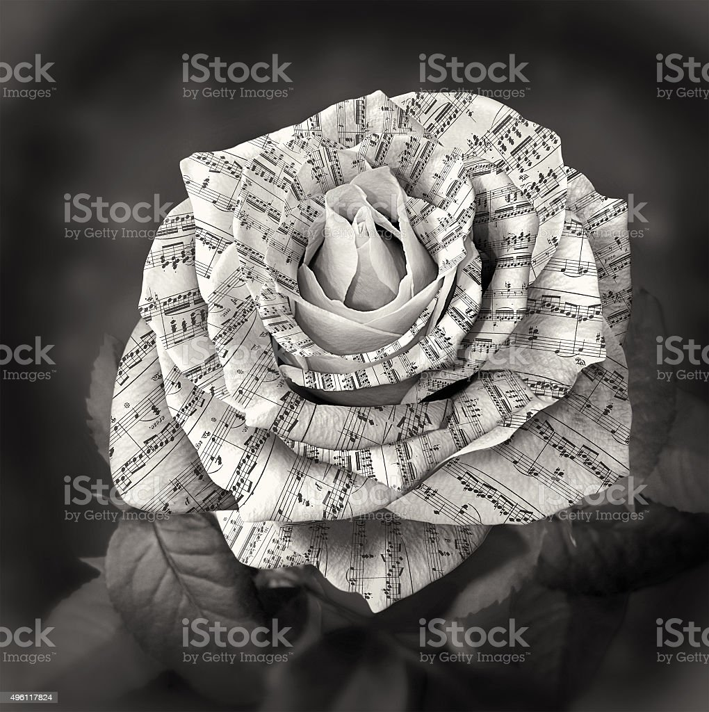Beautiful black and white rose with note on the petals stock photo