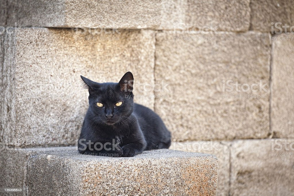 Beautiful black cat in Greece stock photo