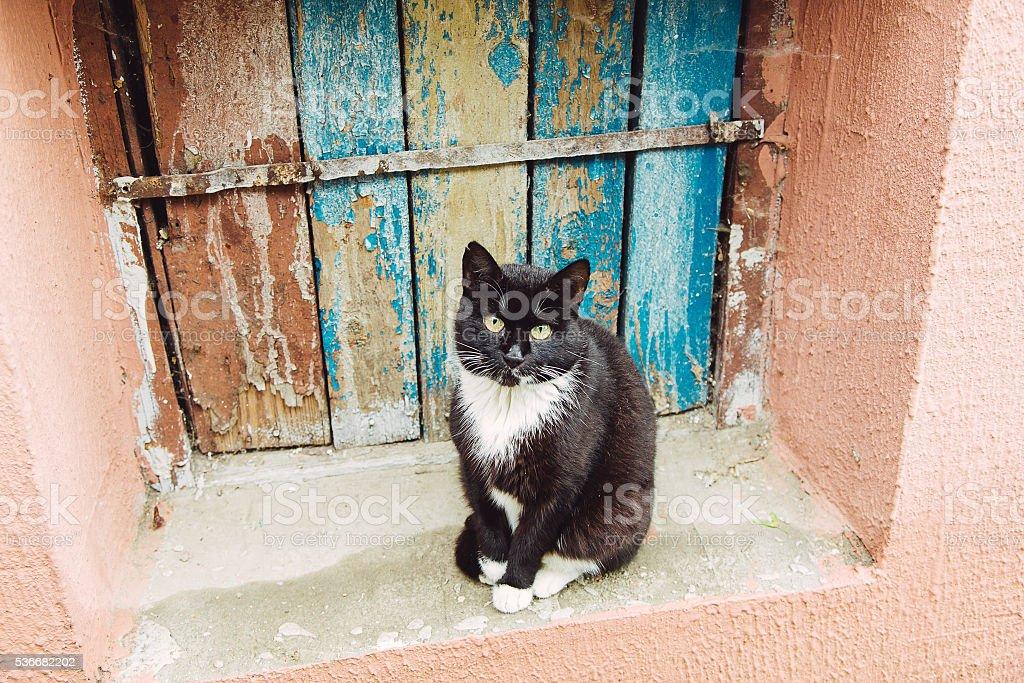 Beautiful black cat sitting on the windowsill stock photo