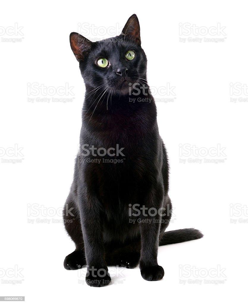 Beautiful black cat sitting stock photo