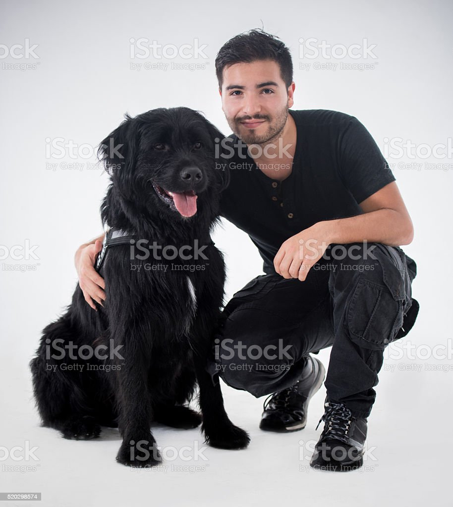 Beautiful black dog stock photo