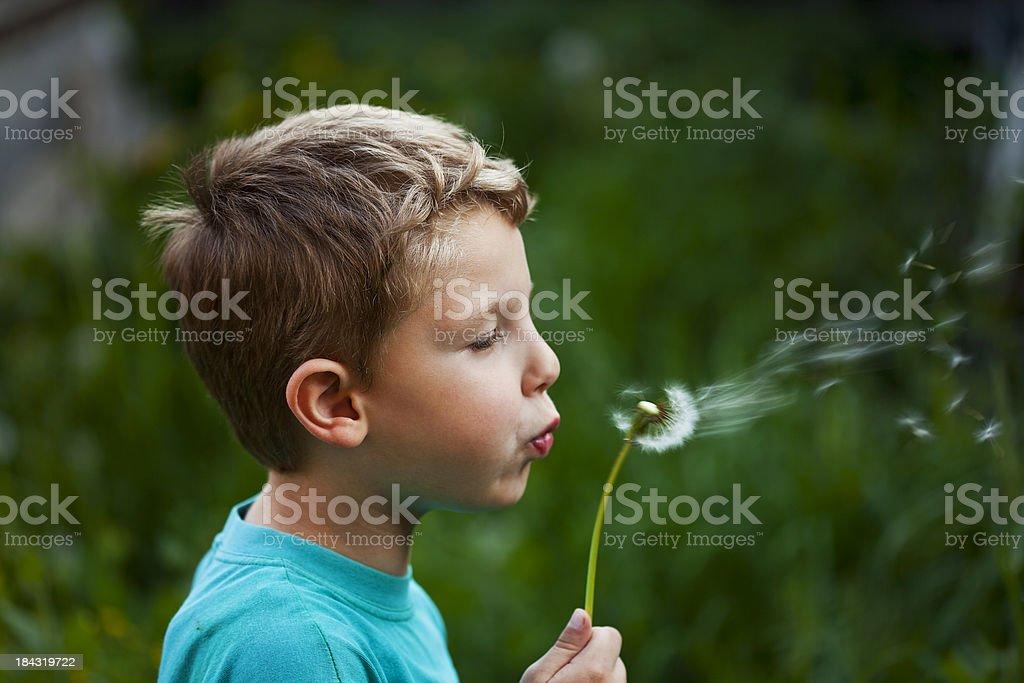beautiful blond kid blow dandelion outdoor royalty-free stock photo