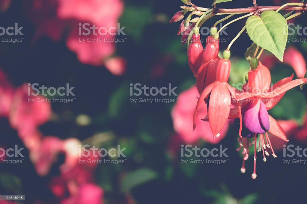 Beautiful blooming orchids in forest stock photo