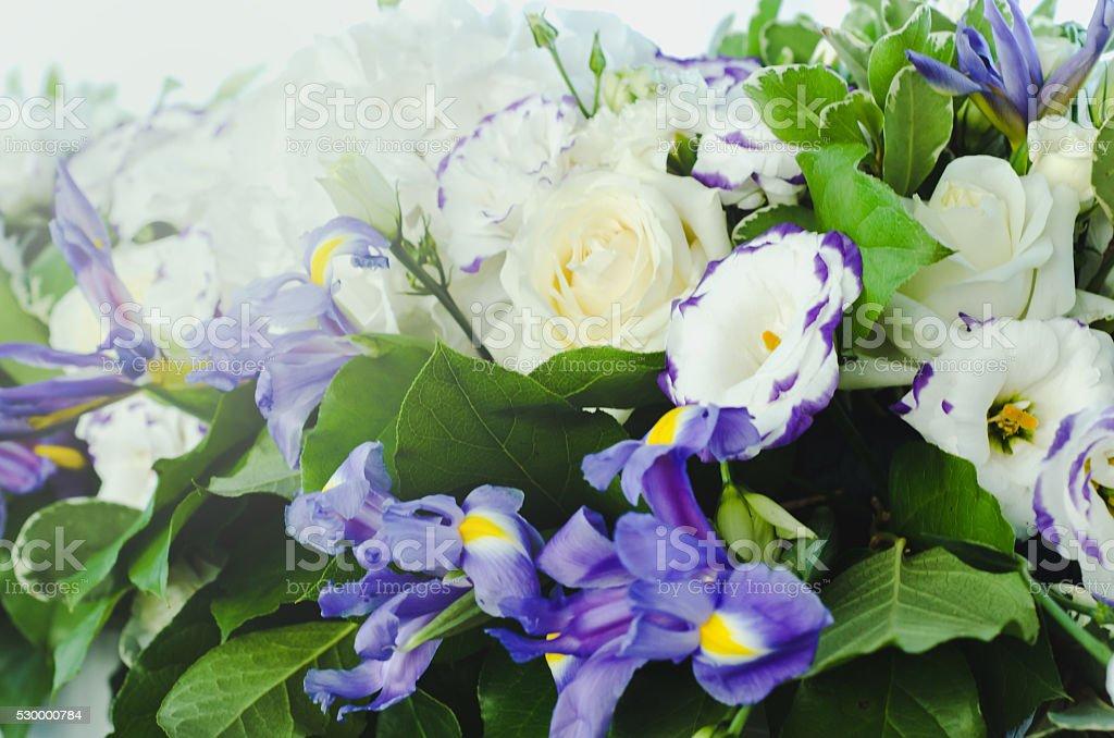 Beautiful blue iris flower with lush leaves, white hydrangea, delicate stock photo