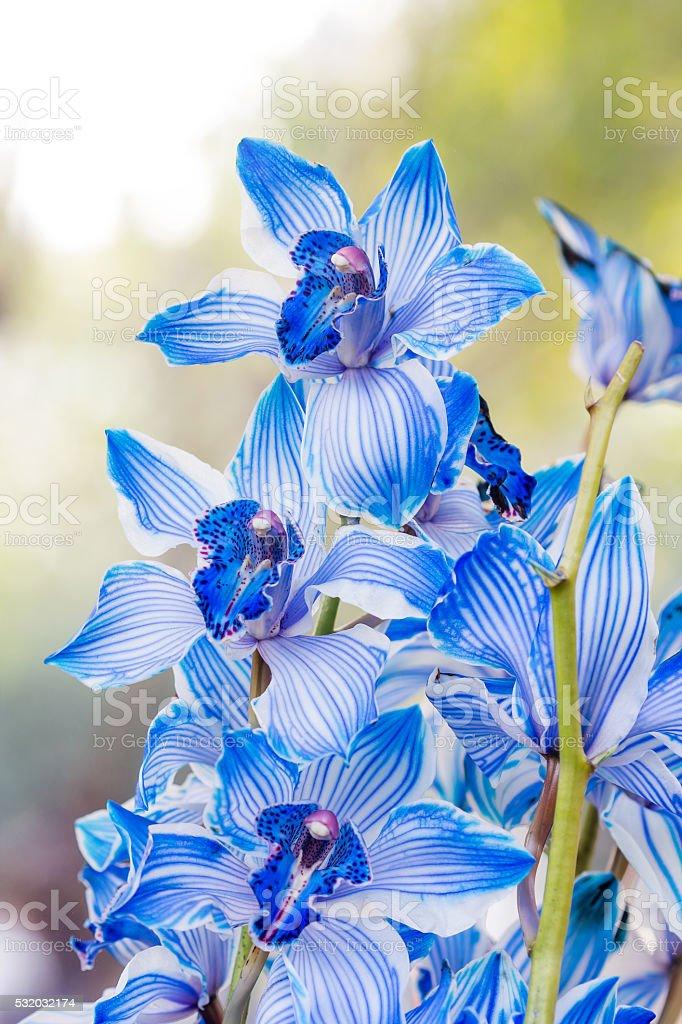 beautiful blue orchids stock photo