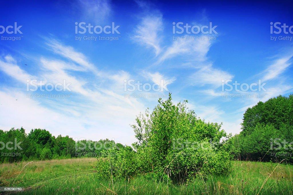beautiful blue sky. picturesque landscape. stock photo