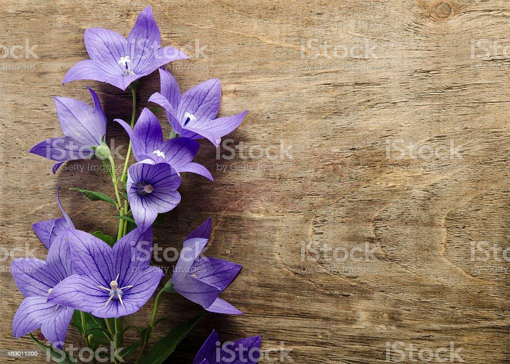 beautiful bluebells on wooden background stock photo