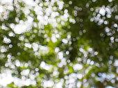 beautiful blurred tree and bokeh tree