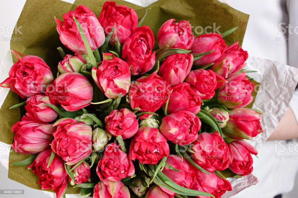beautiful bouquet Crimson tulip with in woman hand . colorful color mix flower stock photo