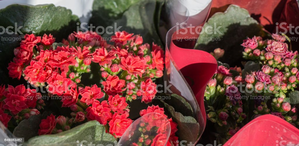 Beautiful bouquet of  flowers of various types stock photo