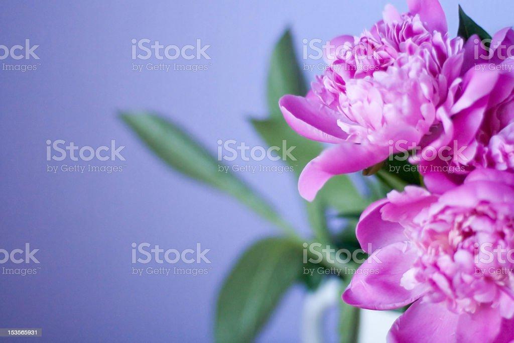 Hermoso ramo de flores foto de stock libre de derechos