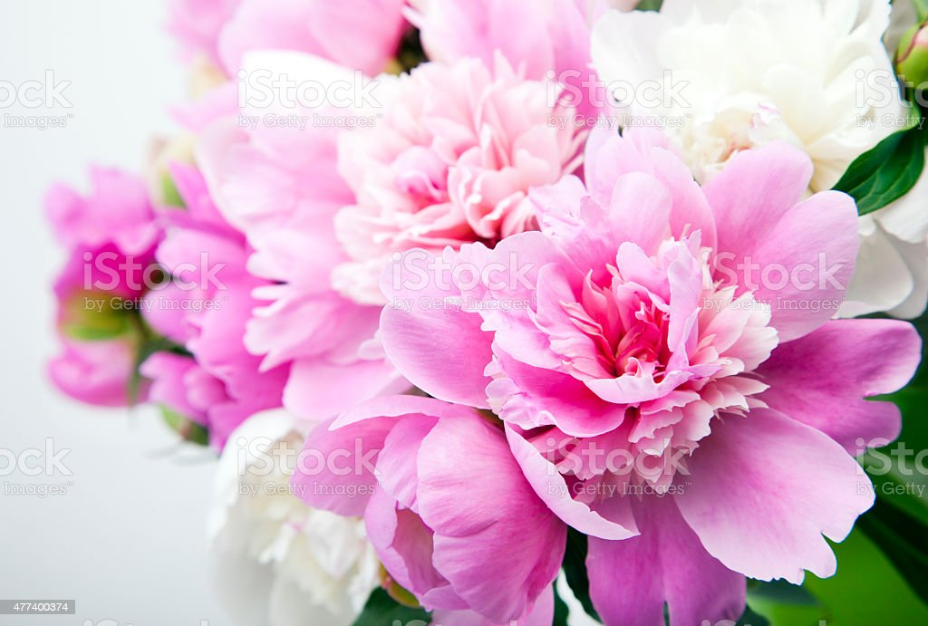 Beautiful bouquet of pink and white peonies in a vase is not a white...
