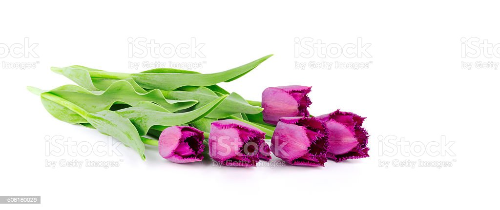 Beautiful bouquet of tulips isolated on a white stock photo
