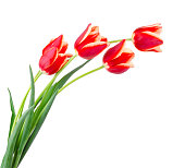 Beautiful bouquet of tulips on a white