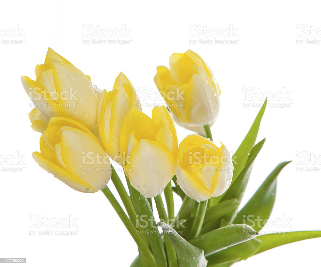 Beautiful bouquet of yellow tulips on a white background. royalty-free stock photo