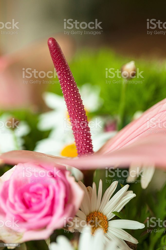 Beautiful bouquet, pink roses and daisies royalty-free stock photo