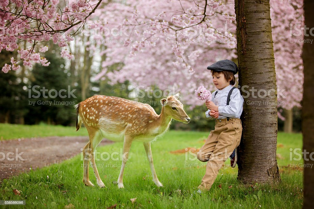 Beautiful boy, standing in a cherry blossom gardenwith little fo stock photo