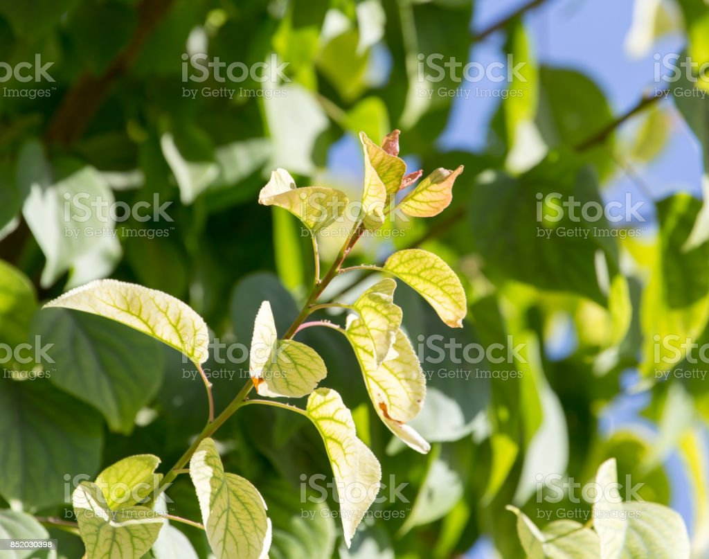 Beautiful branch of a tree as a background stock photo