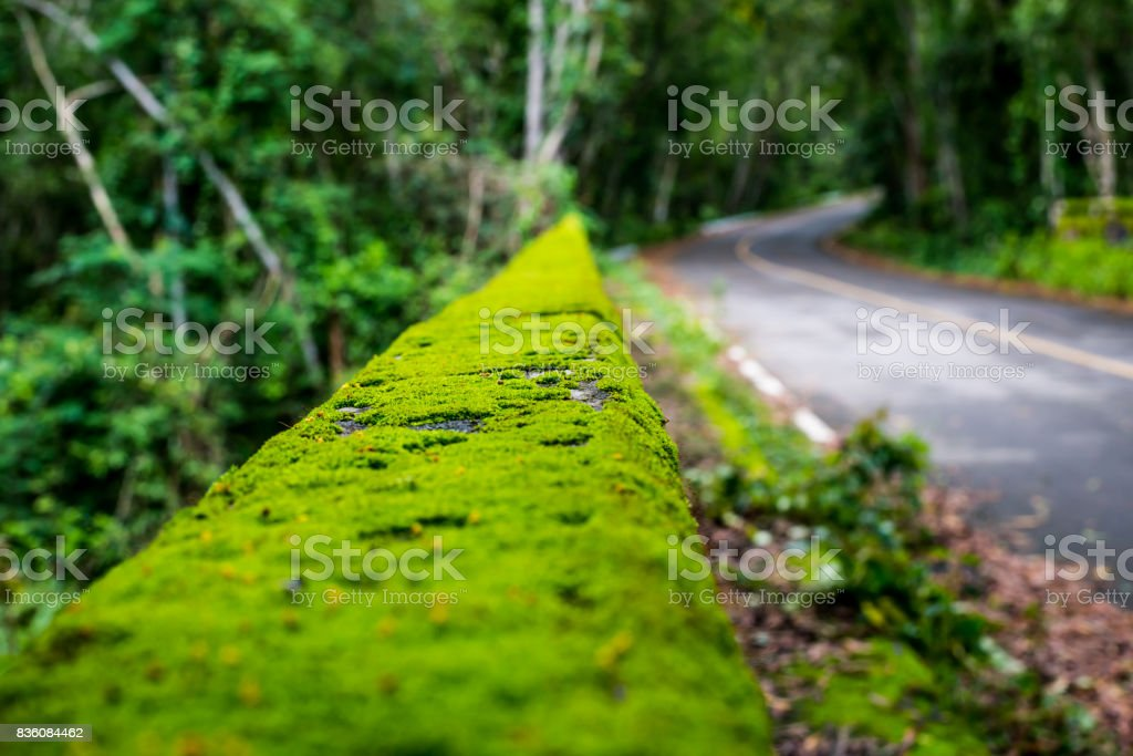 Beautiful bridge rain forest at national park, Thailand stock photo