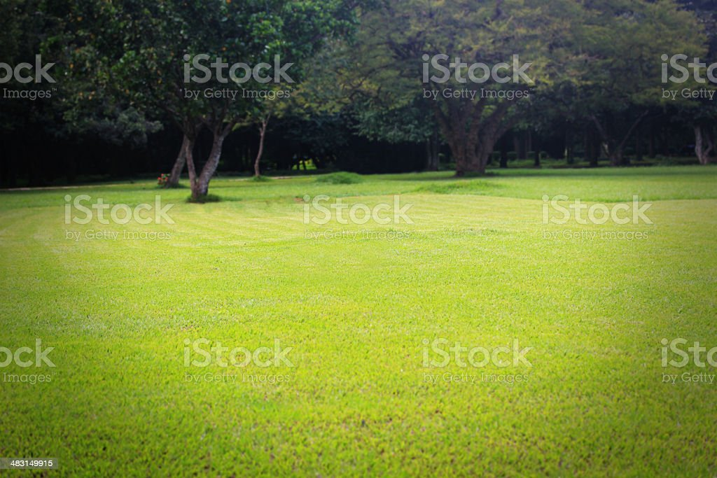 Beautiful bright green lawn & trees at lalbagh botanical gardens stock photo