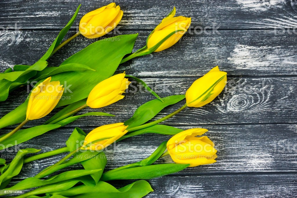 Beautiful bright yellow tulip flowers lie helter-skelter stock photo