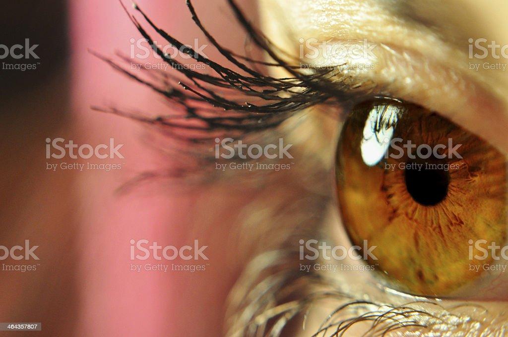 beautiful brown eye behind lush lashes stock photo