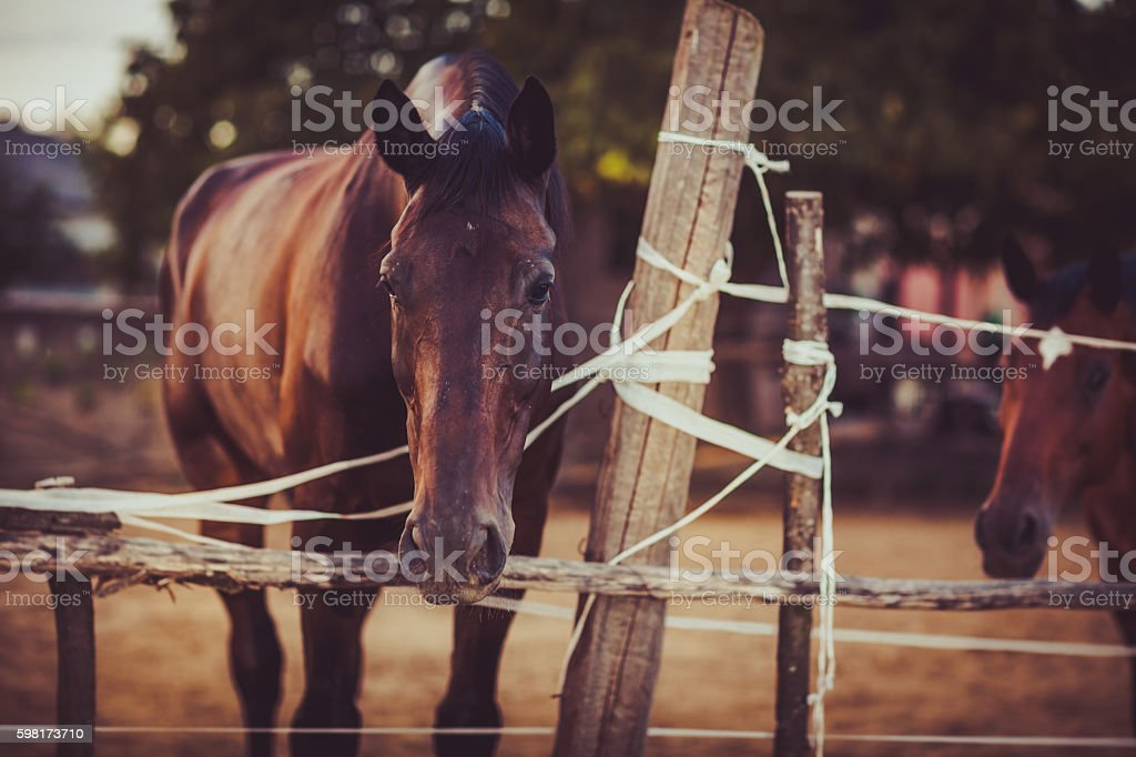 Beautiful brown horse at farm stock photo