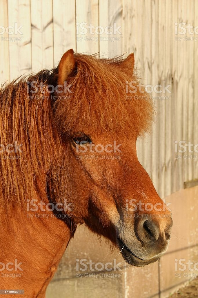 Beautiful brown horse stock photo