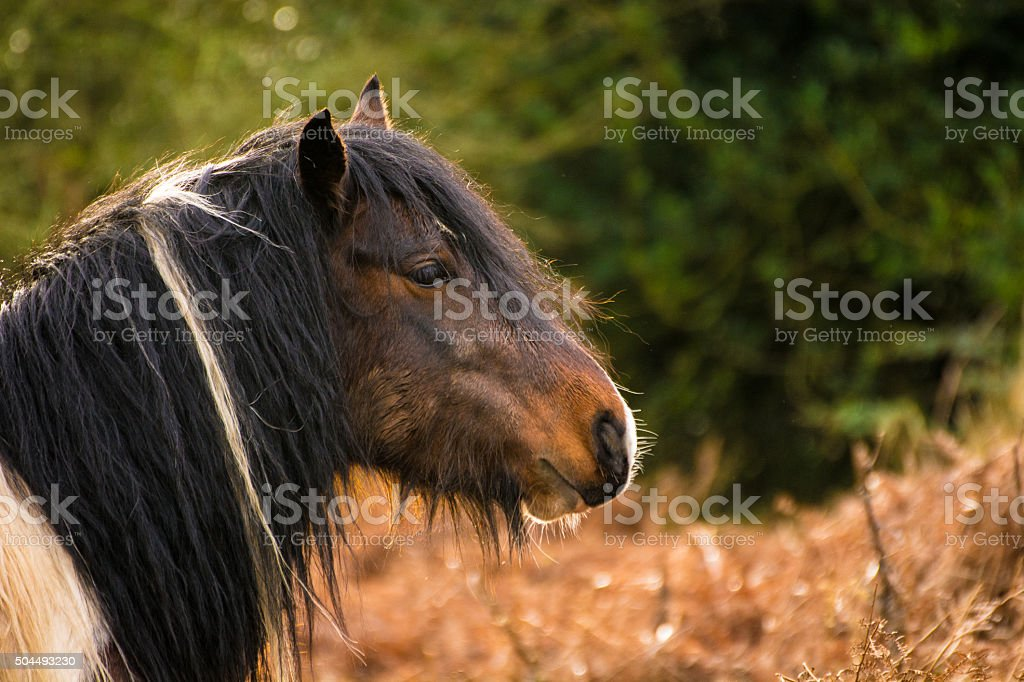 Beautiful Brown Horse With Long Black And White Hair. stock photo