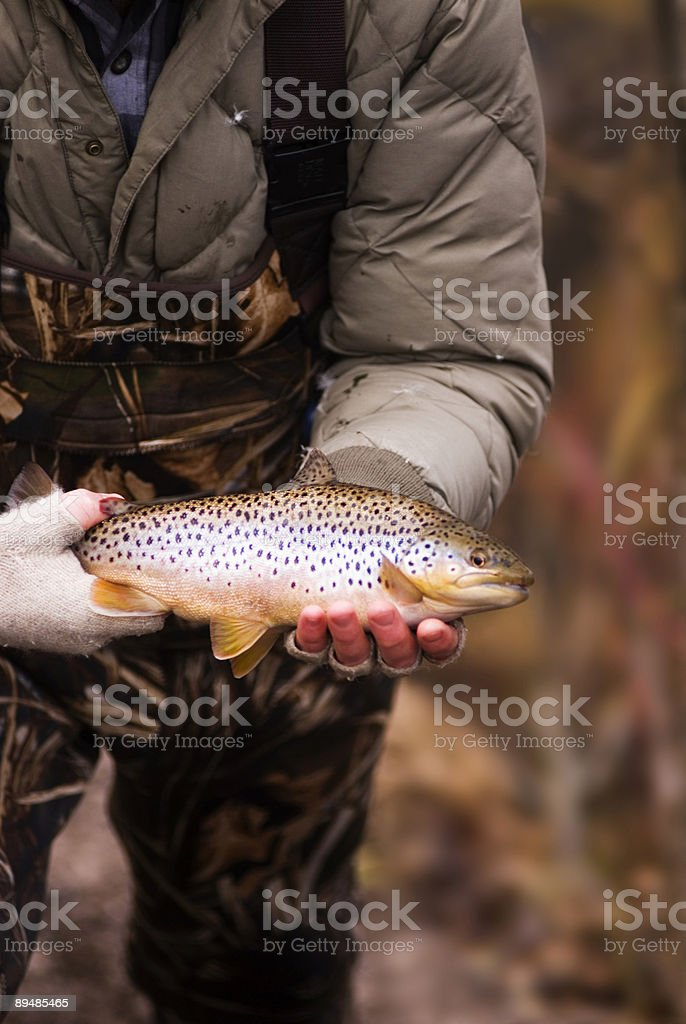 Beautiful Brown Trout stock photo