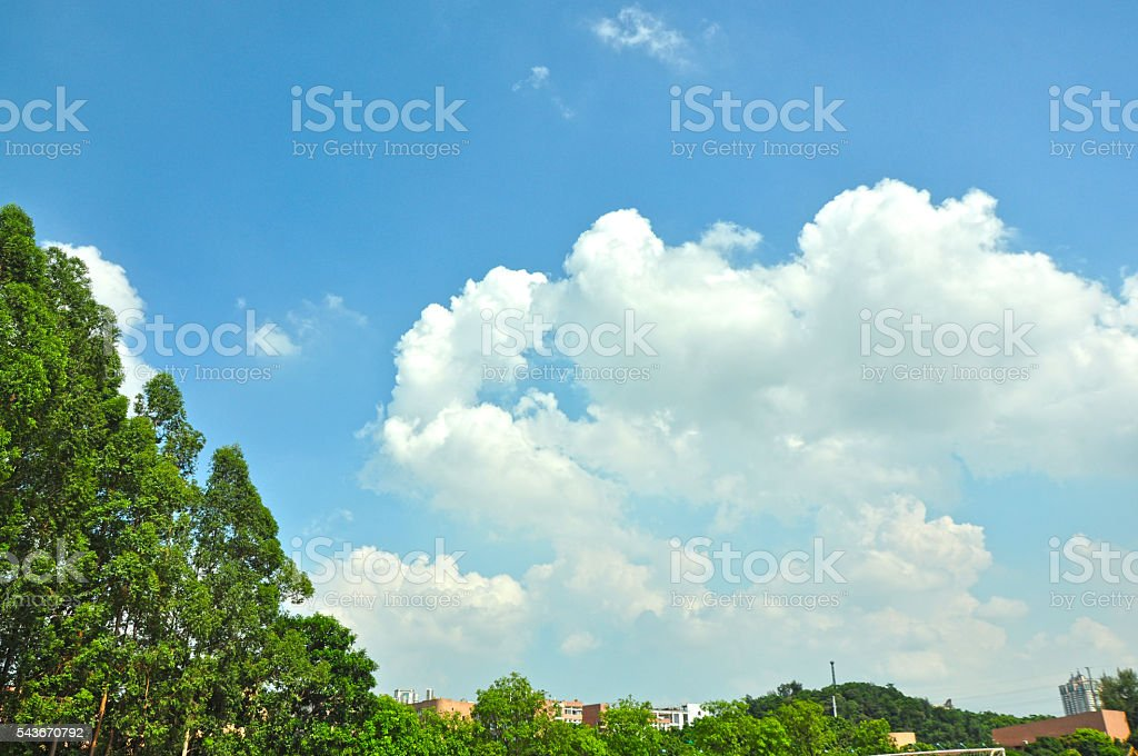 Beautiful bule sky and trees background. stock photo