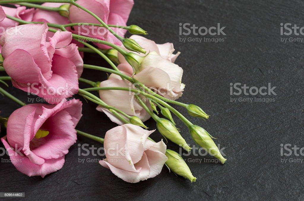 Beautiful bunch of pink lisianthus flowers on grey slate stock photo