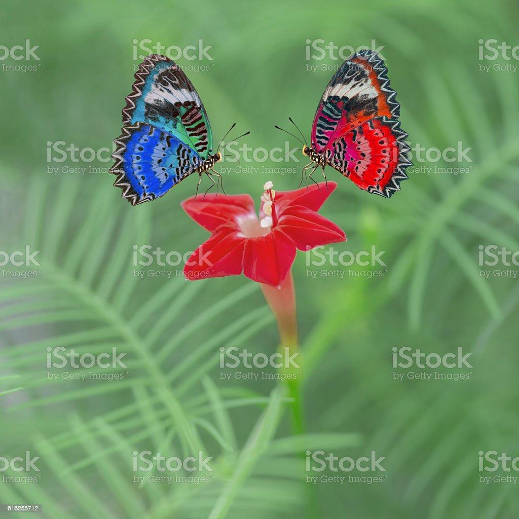 De magnifiques papillons photo libre de droits