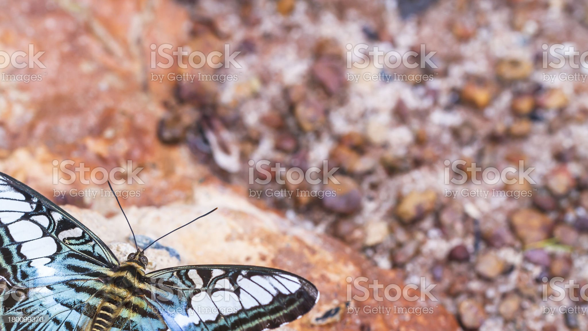 Beautiful butterfly in nature royalty-free stock photo
