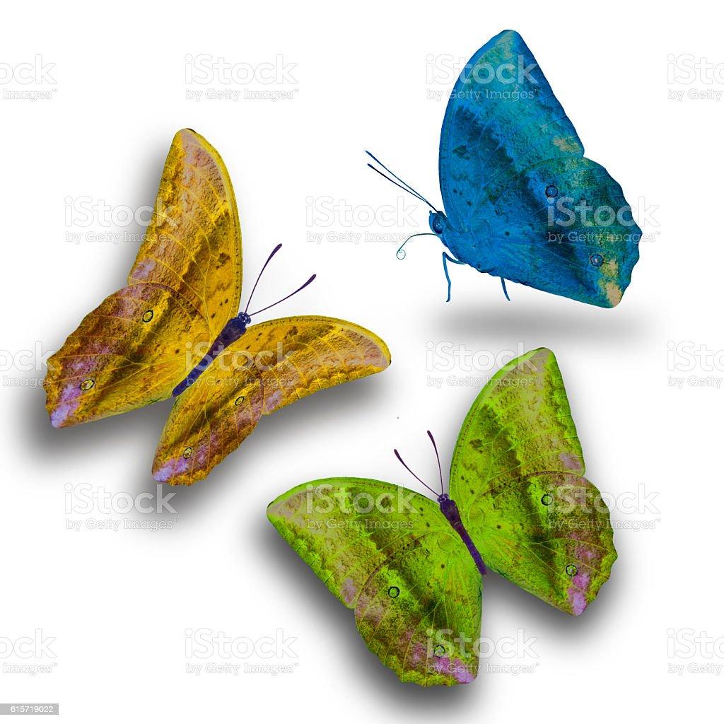 Beau papillon isolé sur fond blanc photo libre de droits