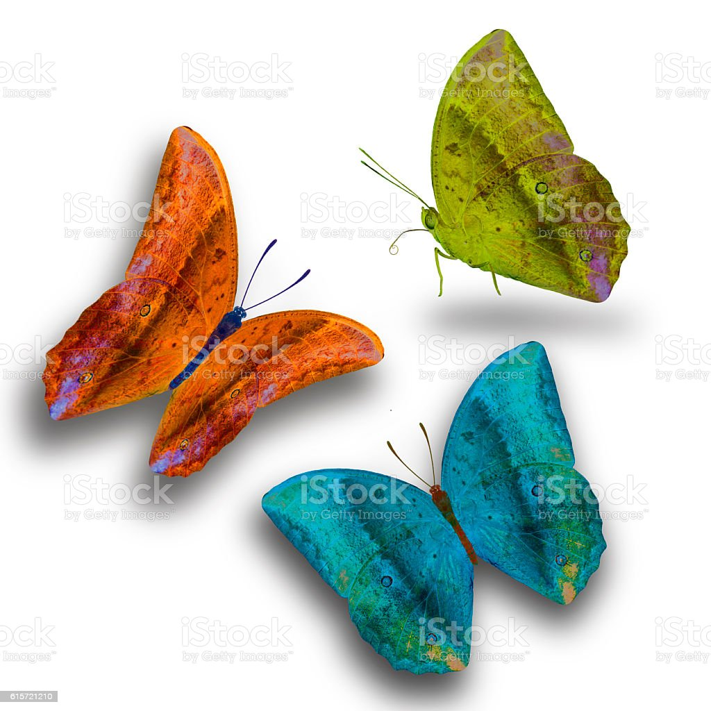 Beautiful butterfly isolated on white background stock photo