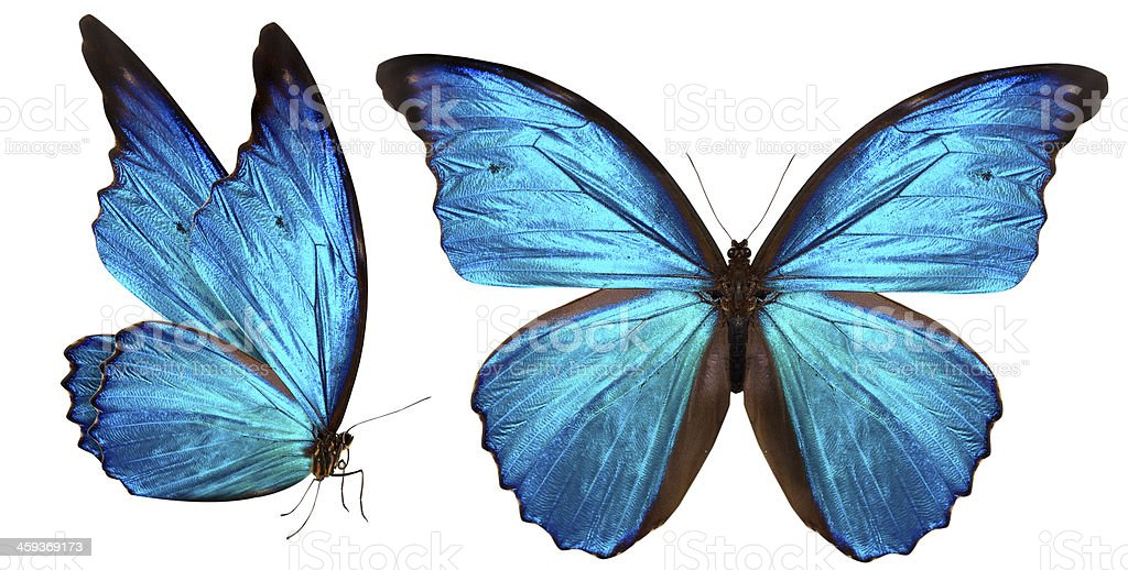 beautiful butterfly isolated on white stock photo