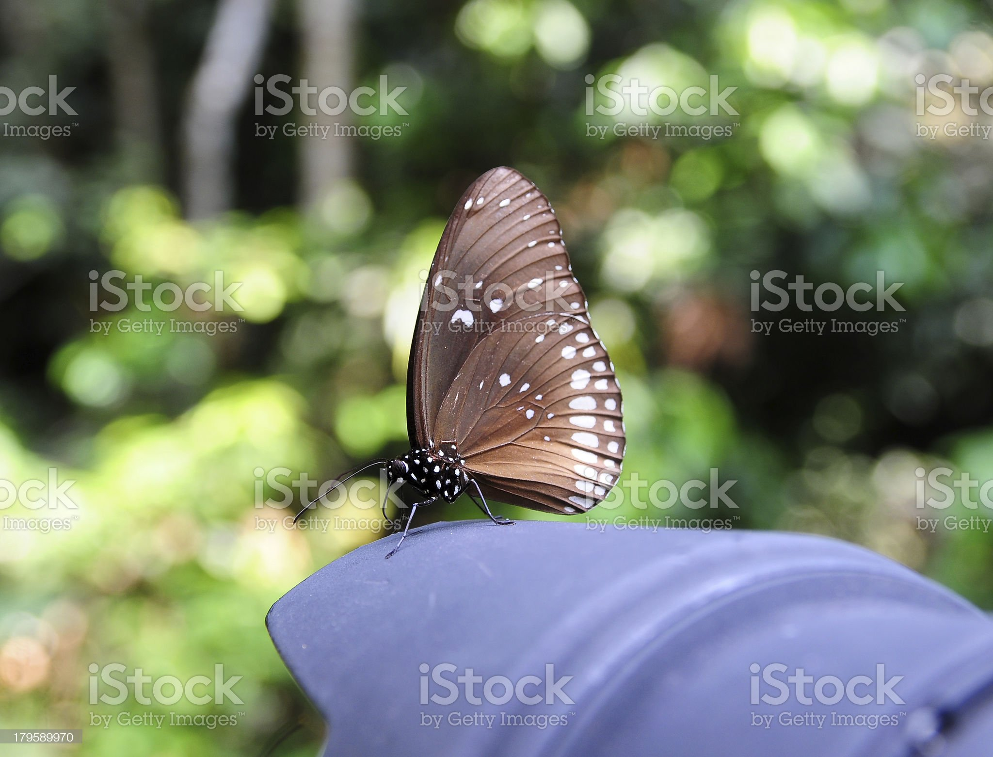 Beautiful butterfly on a camera lens royalty-free stock photo